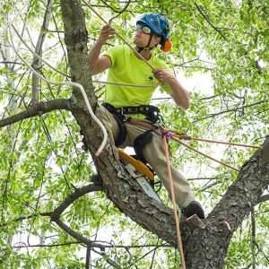 Aerial Lift for tree trimming